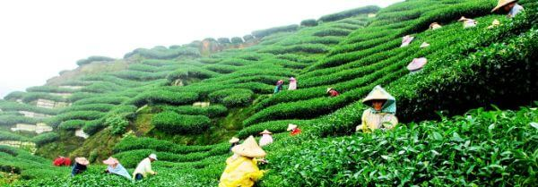 Darjeeling, West Bengal Best places to travel with toddlers in India